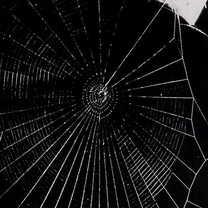 Regelmässig gesponnenes Netz einer Spinne auf LSD.