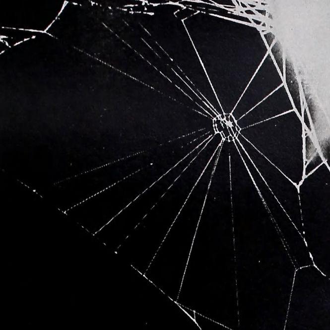 Ein nicht zu Ende gesponnenes Netz einer Spinne auf einem Schlafmittel.