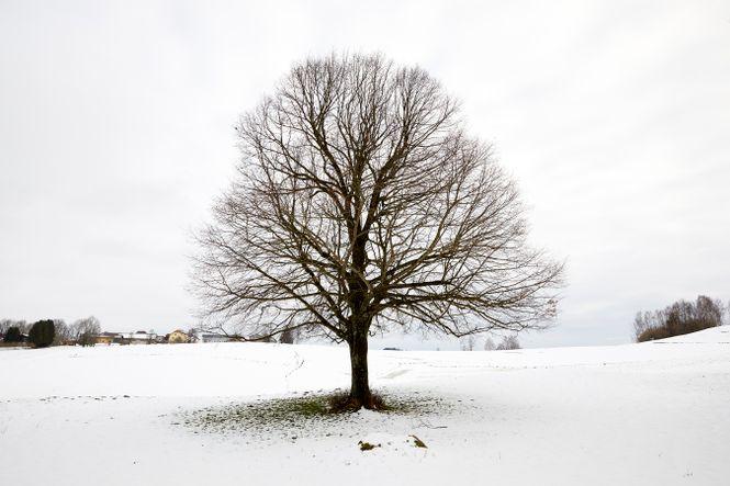 Baum in verschneiter Landschaft